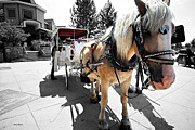 Sight See Prints - Carriage Horse Print by Cheryl Young