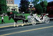 Horse And Wagon Photos - Carriage Ride by Dick Willis