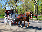 Spring Nyc Digital Art Posters - Carriage Ride in Central Park Poster by Eleanor Abramson