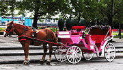 Horse Images Framed Prints - Carriage Ride in Montreal Framed Print by John Rizzuto