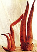 Interior Still Life Photo Metal Prints - Carrot Sculpture 3 Metal Print by Sarah Loft