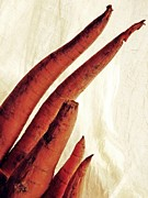 Interior Still Life Photo Metal Prints - Carrot Sculpture 4 Metal Print by Sarah Loft