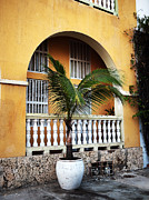 Spanish House Prints - Cartagena Palm Print by John Rizzuto