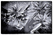 Cartagena Prints - Cartagena Palms Print by John Rizzuto