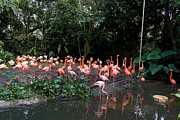 Tourist Attraction Digital Art - Cartoon - Flamingos in their exhibit along with a small lake in the Jurong Bird Park by Ashish Agarwal