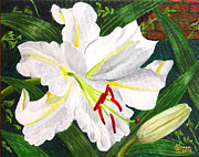 Casa Painting Originals - Casa Blanca Lily by Laura Wilson