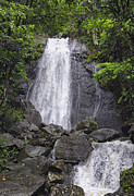 El Yunque Metal Prints - Cascada Blanco Metal Print by Stephen Anderson