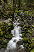 Cascades Prints - Cascade Print by Heather Applegate