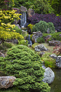 Adam Romanowicz - Cascade Waterfall - Japanese Tea Garden