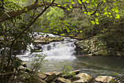 Spring Scenes Prints - Cascades at Coker Creek Print by Debra and Dave Vanderlaan