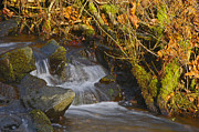 Falling Water Creek Prints - Cascading Creek Print by Sharon  Talson