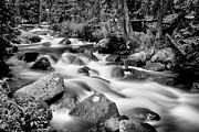 James BO  Insogna - Cascading Rocky Mountain Forest Creek BW