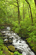 Columbia River Prints - Cascading Stream in the Woods Print by Andrew Soundarajan