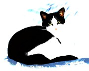 Tuxedo Cat Digital Art - Casey by Dale   Ford