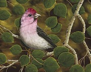 Aspen Tree Paintings - Cassins Finch by Rick Bainbridge