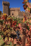 Grape Leaves Photos - Castelle Di Amorosa Fall Leaves and Grapes by Scott Campbell