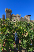 Grape Leaves Photos - Castelle Di Amorosa Grape Leaves and Grapes by Scott Campbell