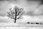 Guy Whiteley Photography Prints - Castile Tree Print by Guy Whiteley