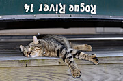 Cat And A Canoe Print by Susan Leggett