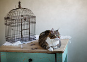 Dekorativ Framed Prints - Cat and Bird Cage Framed Print by Nailia Schwarz