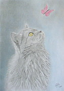 Cats Drawings Originals - Cat and butterfly by Cybele Chaves