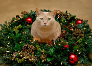 Lights Prints - Cat and Christmas Wreath Print by Amy Cicconi
