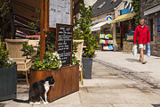 Menu Metal Prints - Cat and Restaurant Concarneau Brittany France Metal Print by Colin and Linda McKie