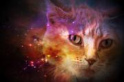 Ricardo Dominguez - Cat and Universe