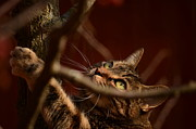 Marianne Kuzimski - Cat Attack
