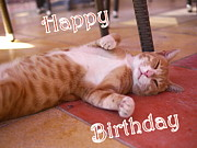 Relaxed Photo Originals - Cat Birthday Card by John Chatterley