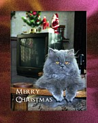 Christmas Card Photo Originals - Cat Christmas Card  by John Chatterley