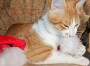 Golden Eye Cat Photos - Cat Christmas Card by Karinna Marvill