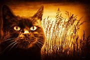 Cat Dreams Print by Bob Orsillo