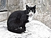 Transilvania Metal Prints - Cat from Draculas City Metal Print by Ion vincent DAnu