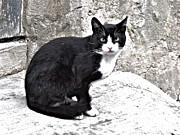 Ion vincent DAnu - Cat from Dracula
