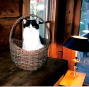 Cabin Window Photo Originals - Cat in a Basket by Sharon Blanchard