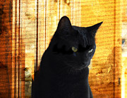 Abandoned Pets Photos - Cat in Contemplative Mood by Pamela Briggs-Luther