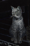 Gray Tapestries - Textiles Metal Prints - Cat in the dark Metal Print by Ruth Ash