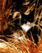 Kitty Digital Art - Cat In The Golden Grass by Gothicolors With Crows