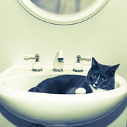 Cute Cat Digital Art Posters - Cat In The Sink Poster by Susan Stone