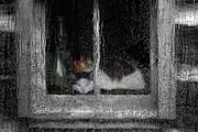 Jack Zulli - Cat In The Window
