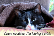 Art Photography Prints - cat Leave me alone Print by Art Photography