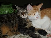 Golden Eye Cat Photos - Cat Love by Karinna Marvill