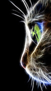 Cool Lion Prints - Cat Macro  Print by Mark Ashkenazi