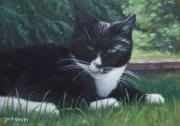 Oil Cat Paintings - Cat by Martin Davey