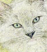 Cat - Mink Ragdoll - Smokey Blu Print by Donna E Pickelsimer