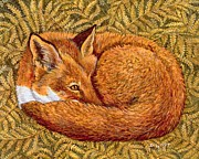 Foxes Prints - Cat Napping Print by Ditz