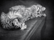 Repose Art - Cat On A Bench by Diane Schuster