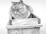 Animals Drawings Acrylic Prints - Cat on a Box Acrylic Print by Arthur Fix