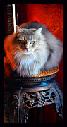 Susanne Still - Cat on a Pedestal